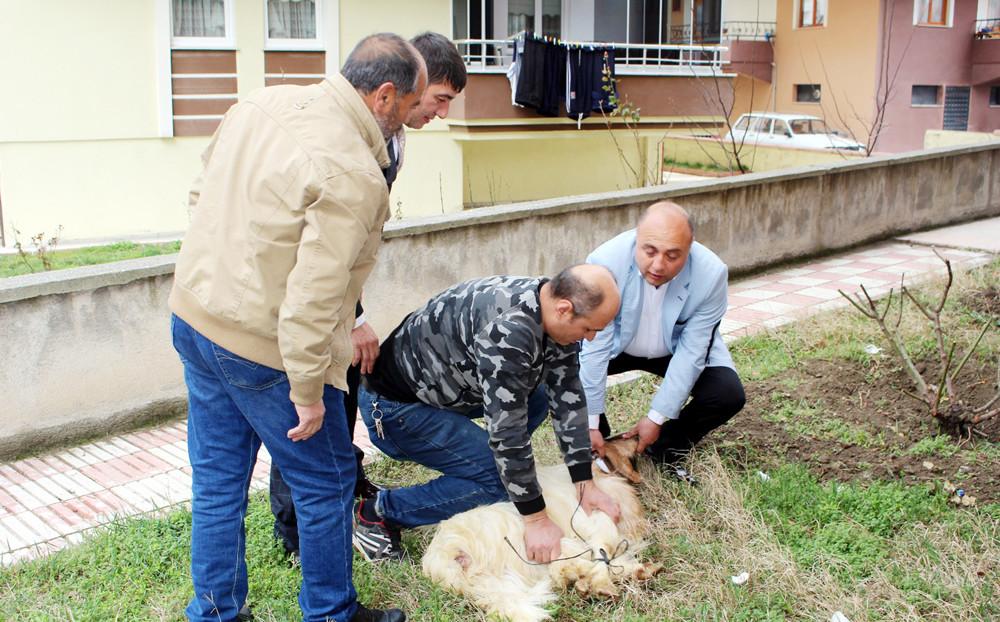 CHP Adayı Özgür Kılıç için kurban kesti